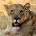 3 Days Wild Camp in Moremi NP