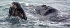 The Whale Coast