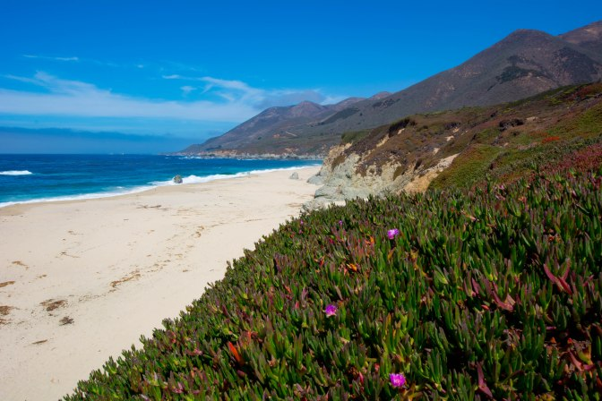 garrapata-beach-and-flowers