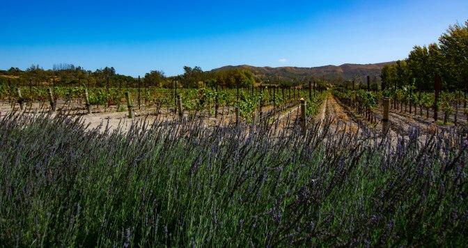 lavendar-melvilles-winery