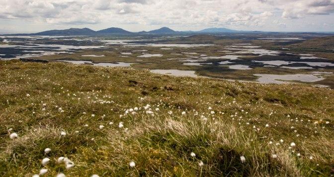 brown moorland