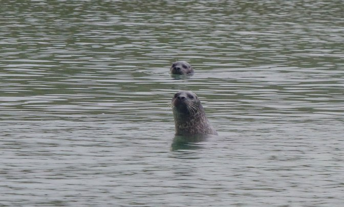 knockv seals